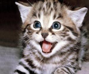 Rompicapo di Piccolo gatto