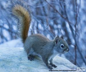 Rompicapo di Piccolo scoiattolo rosso