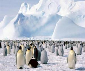 Rompicapo di Pinguini