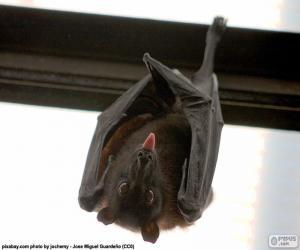 Rompicapo di Pipistrello