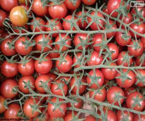 Rompicapo di Pomodoro nel ramo