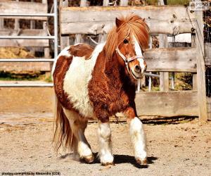 Rompicapo di Pony