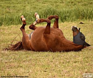Rompicapo di Preferendo cavallo