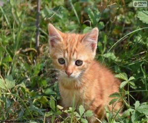 Rompicapo di Prezioso gattino