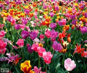 Rompicapo di Primavera
