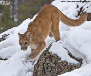 Rompicapo di Puma che cammina