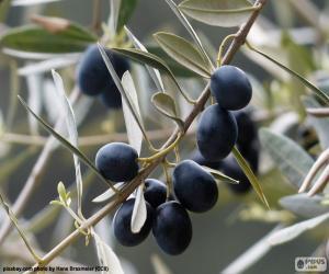 Rompicapo di Ramo d'ulivo nero