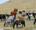Mandria di cavalli selvaggi