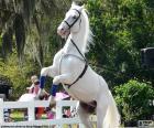 Cavallo bianco elevato