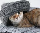 Gatto e sciarpa