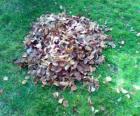 Picking up caduta foglie
