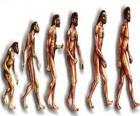 Sequenza di evoluzione umana da australopithecus Lucy per l'uomo moderno passando tra gli altri da uomini di Heidelberg, Pechino, Neanderthal e Cromagnon