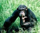 Scimmia che si siede sul pavimento