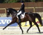 Cavallo e cavaliere in esecuzione di un esercizio di addestramento