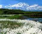 Pianura con vegetazione econ le montagne verso il basso