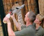 Zoo di alimentazione o detentori di una giraffa