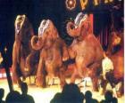 Elefanti formazione