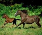 Cavalli e puledro al trotto sulla prateria