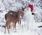 Due cervi accanto a un pupazzo di neve