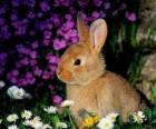 Coniglio tra i fiori