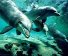 Gruppo di delfini nuotando nel mare