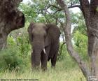 Elefante che mangia erba