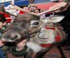 Testa  di renna di Natale