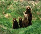 Famiglia di orso