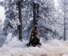Cowboy che monta un cavallo