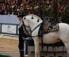 Elegante cavallo con ornamento