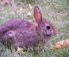Coniglio con una carota
