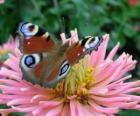 Bella farfalla con le ali spalancate