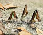 Farfalle su un tronco