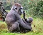Famiglia di gorilla