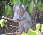 Piccola scimmia