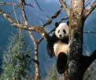Panda su un albero