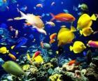 Pesci di varie specie e dimensioni