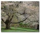 Fioritura albero