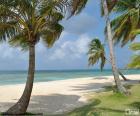 Palme in riva al mare