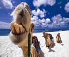 I cammelli dei Re Magi a riposo nel loro cammino verso Betlemme