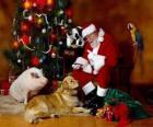 Babbo Natale alimentazione alcuni animali