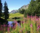 Un lago nei fiori in primo piano e l'ufficio di alta montagna