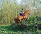 Corso di tecnica equestre Concorrenza, mette alla prova la comprensione tra cavallo e cavaliere attraverso varie prove.