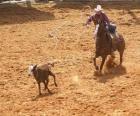 Cowboy che monta un cavallo e che interferisce una testa del bestiame con il lasso