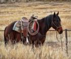 Cavallo di un cowboy