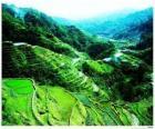 Terrazze di riso della Cordigliera filippina