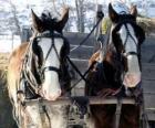 Due cavalli che tiravano un carro
