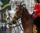 Cavalli con ornamenti