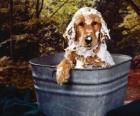 Cane facendo un bagno