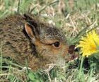 Coniglio con un fiore